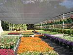 Мрежа за сянка за оранжерии