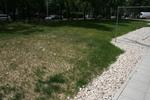 озеленяване на паркови пространства и обществени градини