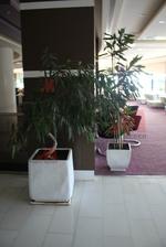 Красиви бетонни кашпи за заведения за външно ползване в заведения