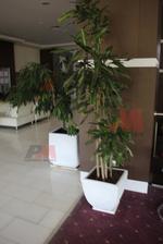 бетонни кашпи за заведения за външен интериор в заведения