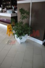 Луксозни бетонни кашпи за заведения за изискано оформление на обстановката в хотел